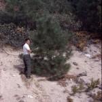 1st Christmas Tree (honeymoon)