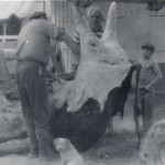 Butchering Beef in Nampa, 1977